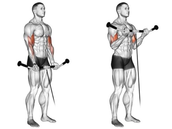 Biceps Cable Curls | Sporto Namai