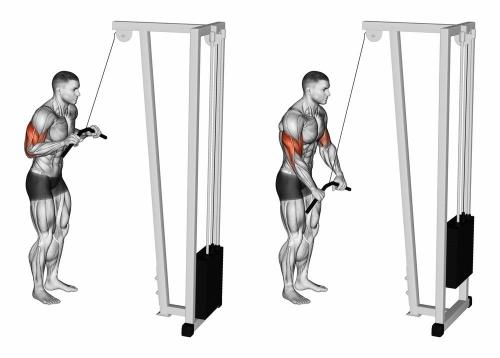 Cable Triceps Push Down | Sporto Namai