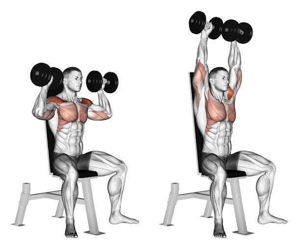 Seated Dumbbell Shoulder Press | Sporto Namai